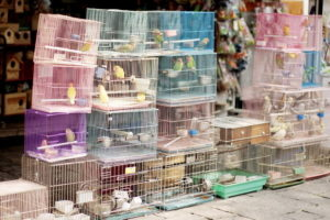 Птичий рынок в Нижнем Новгороде