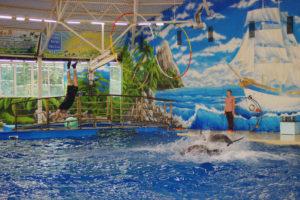Дельфинарий Новгород