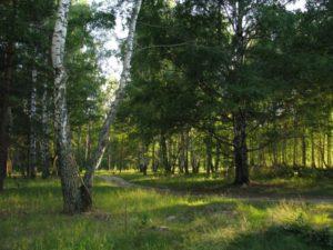 Климат в Нижегородской области